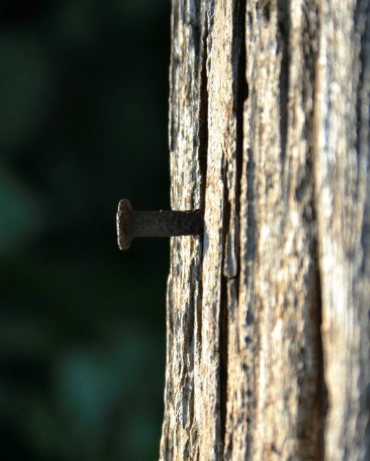 nail in plank