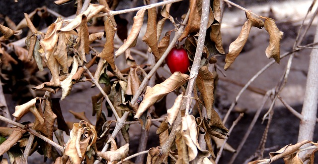 dry-berry