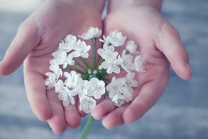 flower-1283259_1920