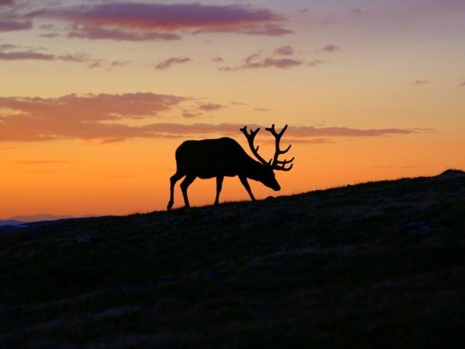 landscape-nature-silhouette-sunrise-sunset-prairie-640709-pxhere.com