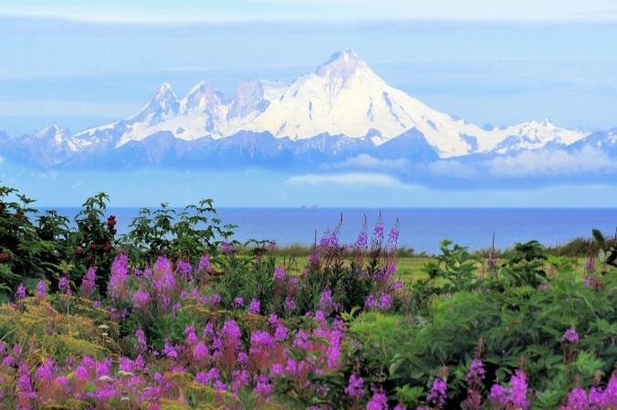 landscape-nature-wilderness-blossom-mountain-snow-700486-pxhere.com (1)