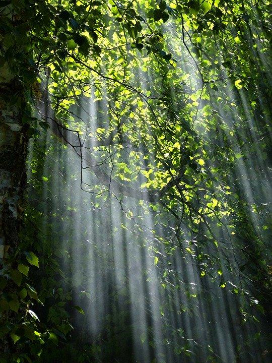 Sunlight Light Trees Forest Foliage Sunbeams